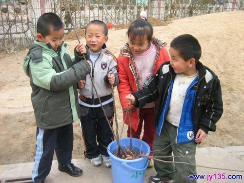 东营区实验幼儿园植树活动:我和小树做朋友